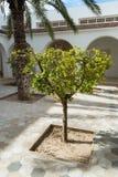 Litet träd i borggård Arkivbild