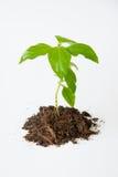 Litet träd med att växa för jord Arkivbilder