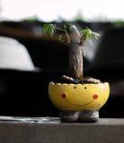LITET TRÄD SOM ÄR FULLVUXET I SMILEY-POT Royaltyfri Fotografi