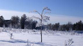 litet träd som täckas med snö royaltyfria foton