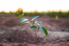Litet träd som växer på jordning Arkivbild