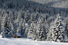 Litet trähus på skogkanten i solig dag Arkivbilder