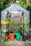 litet växthus arkivbilder