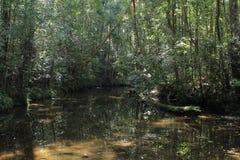 Litet vatten i skog royaltyfria bilder