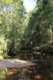 Litet vatten i skog royaltyfri fotografi