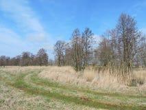 Litewski wiosna krajobraz Obraz Royalty Free
