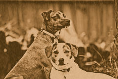 Lithograph Dogs. Lithograph vintage-style picture of Jack Russell dogs Stock Photography