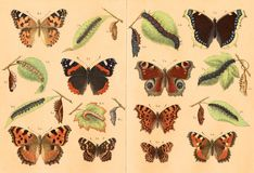 Lithography of butterflies Royalty Free Stock Images