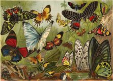 Lithography of butterflies Royalty Free Stock Photos