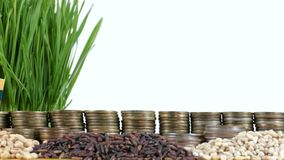 Lithuania flag waving with stack of money coins and piles of wheat. And rice seeds stock video