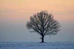 Lithuania landscape . Winter sunset Stock Photography