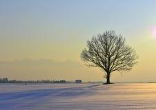 Lithuania landscape . Winter sunset Stock Image