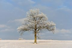 Sunny winter day.Lonely tree on a field. Royalty Free Stock Images