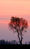 Lithuania sunset. Sunset with tree sillouette. Shot taken in Lithuania Royalty Free Stock Image