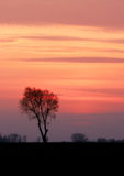 Lithuania sunset. Sunset with tree sillouette. Shot taken in Lithuania Stock Image