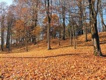 Lithuanian autumn landscape Stock Images