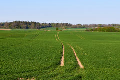 Lithuanian landscape. Lithuanian countryside, farmers sow fields sunny spring evening Stock Photos