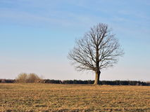 Lithuanian landscape Stock Image