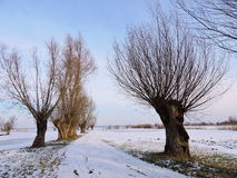 Lithuanian landscape in winter Royalty Free Stock Image