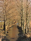 Lithuanian landscape, winter Royalty Free Stock Photo
