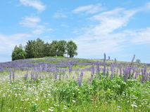 Lithuanian meadow in summer Stock Photography