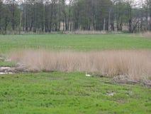 Lithuanian spring landscape Stock Image
