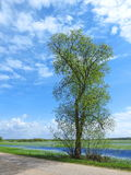 Lithuanian spring landscape Royalty Free Stock Image