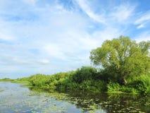 Lithuanian summer landscape Stock Images