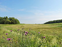 Lithuanian summer landscape Royalty Free Stock Photos