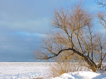 Lithuanian winter landscape Stock Image