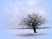 Lithuanian winter landscape Royalty Free Stock Photos