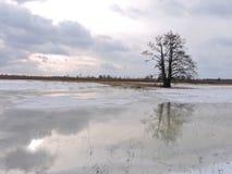 Lithuanian winter landscape Stock Photography