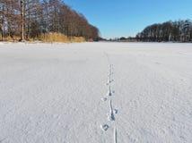 Lithuanian winter landscape Stock Images