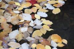 Litier parkerar Ashland, Oregon royaltyfria bilder