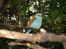 Litle鸟 免版税图库摄影