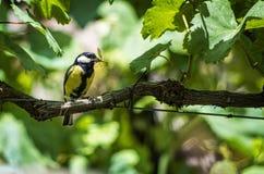 Litle bird Stock Photos