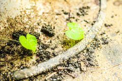 A litle heart green Royalty Free Stock Photography