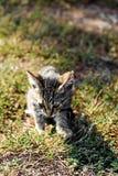 Litle Katze Stockbild