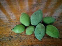 Litle mango Stock Photos