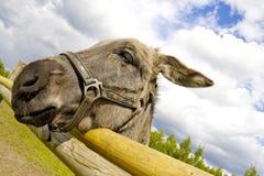 A litlle donkey. Stock Image