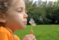 Litlle girl blowing a dandelion Stock Images