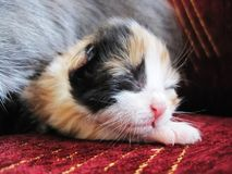 Litlle kitty royalty free stock photo