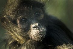 Cute little monkey. In the zoo, yearning for freedom Stock Images