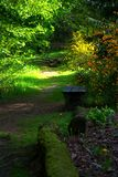 Bench in the park. Litlle wood bench in the peaceful park. Green bracken around. relaxing place Stock Photography
