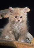 Domestic kitten Stock Images