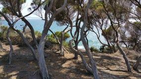 litoral Imagem de Stock