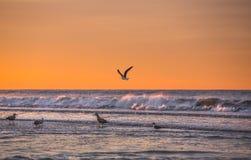 Litoral de Oceano Atlântico Fotografia de Stock