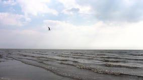 Litoral do mar com ondas e pássaro de voo nas nuvens vídeo Respingo marinho das ondas na praia vulcânica da areia calmo filme