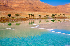 Litoral do Mar Morto Foto de Stock Royalty Free