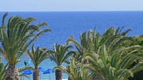 Litoral mediterian tropical bonito com palmeiras e vento claro do movimento lento de água azul video estoque